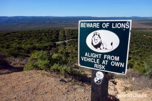 Vorsicht, Löwen!