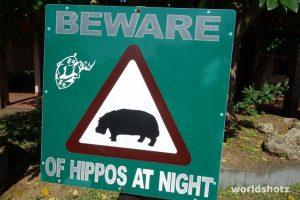 Vorsicht, Hippos!