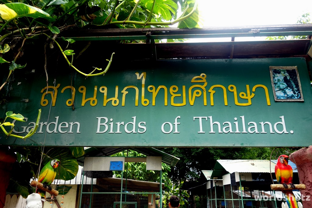 Garden Birds of Thailand