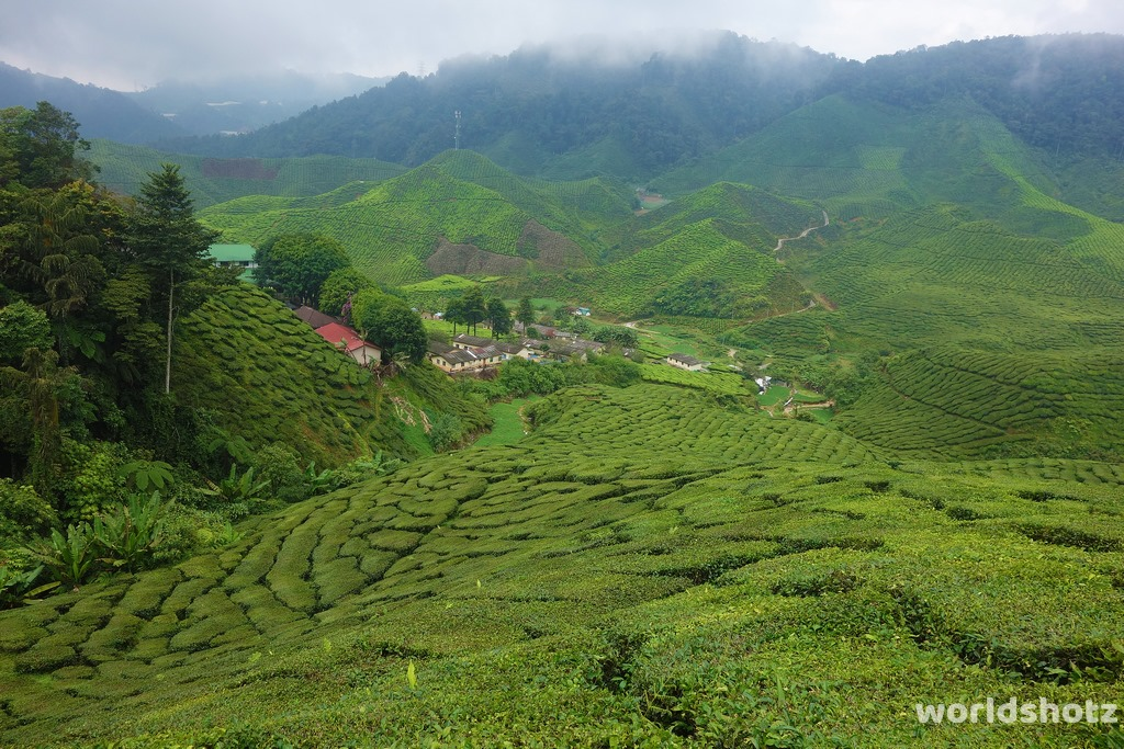 Teeplantage in Cameron Highlands